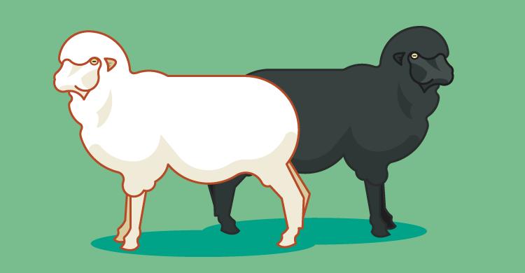 A white sheep and a black sheep