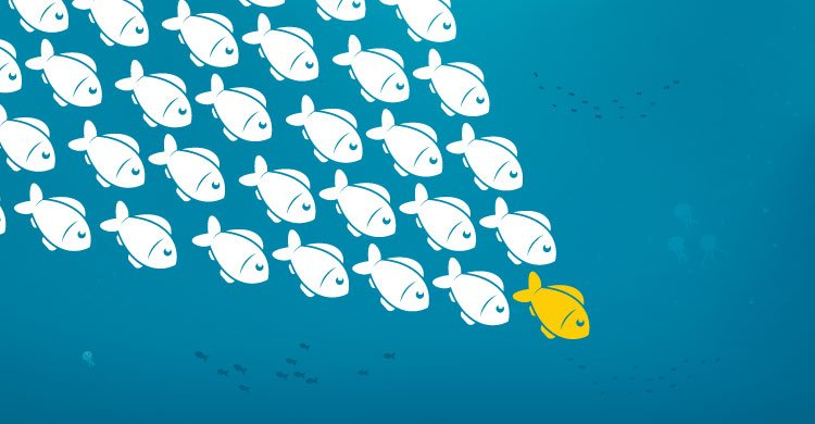 Leading a school of fish.